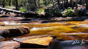 Serene Rapids on the Dana Fork
