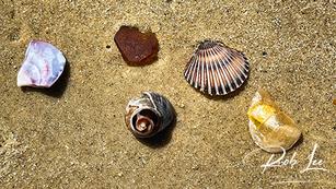 Clam Shells of Cape Cod