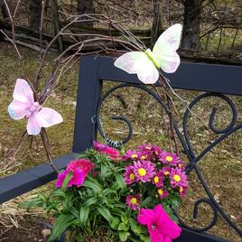 Butterfly arrangement