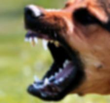 Dog Bite Perez Gurri Law