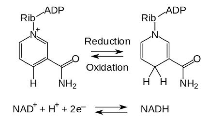 NAD Formula.png