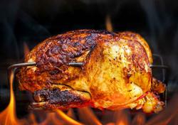 Chickncoop-chicken