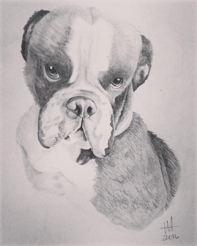 Bulldog 1
