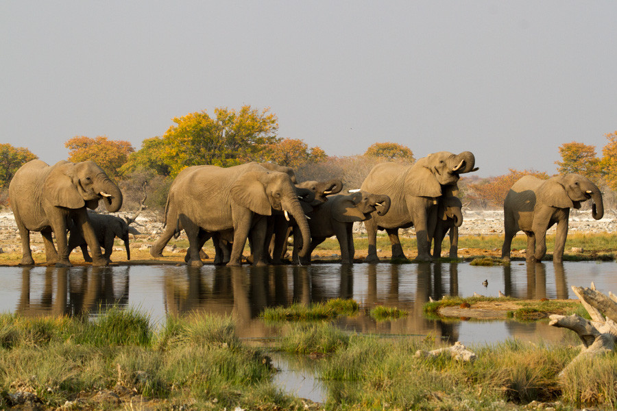 Tourist Attractions in Africa: Etosha National Park Namibia