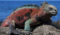 Travel to the Galapagos