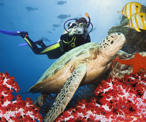 Exhilaration of diving in the astonishingly clear waters of the Caribbean