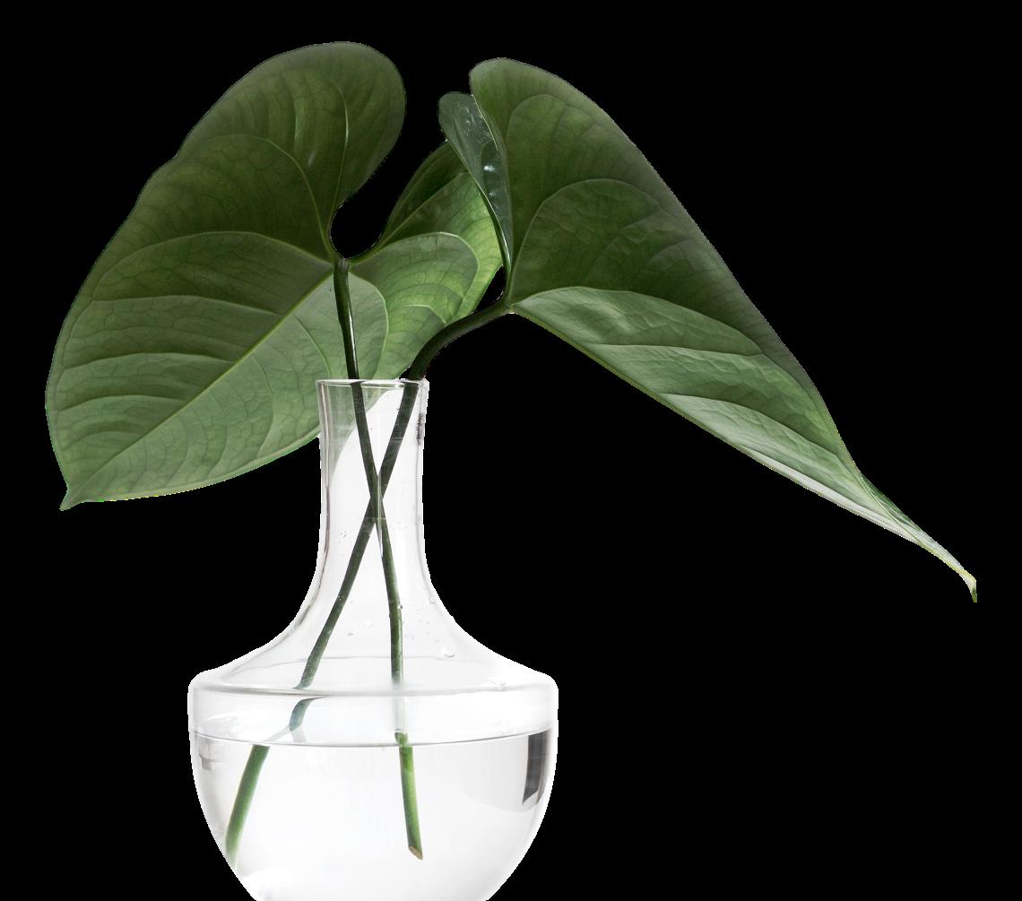 LUMYHI-Medidas Sanitarias-Planta.png