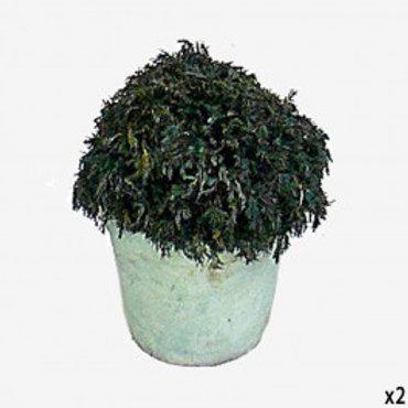 Maceta pintada con planta liofilizada 20 cm