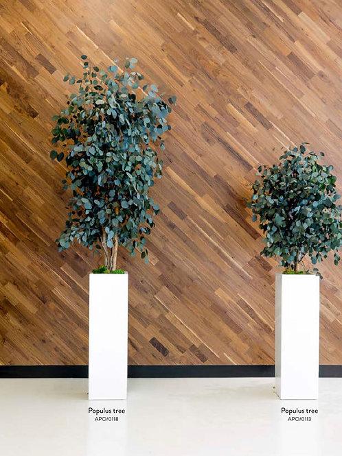 Populos wide tree 130 cm