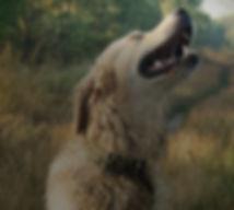 dog.walk.cropped.jpg