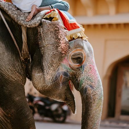 Indien hinterlässt bleibende Eindrücke