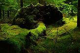 forest-483207_1280-KLEIN.jpg
