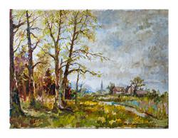 Woods in Norwich