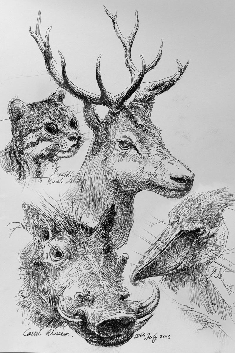 Wildlife Study