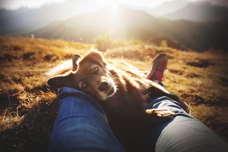 1st-Rescue-Dogs-Anne-Geier-©-800x534.jpg