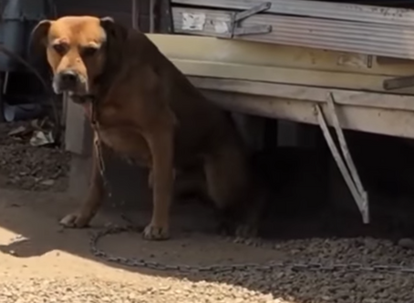 Try Not To Cry as you Watch This Dog Rescue Story