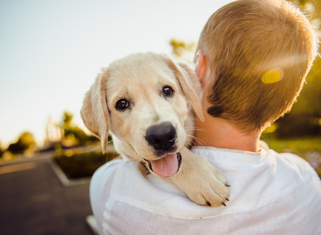 The Healing Power of Pets: How Animals Can Help You Build a Better Life