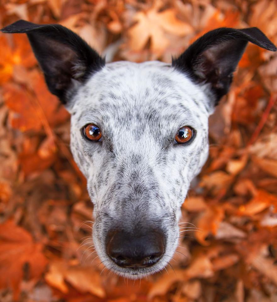 dog-photographer-of-the-year-2019-winner