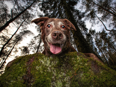 The Best Dog Photos of 2020