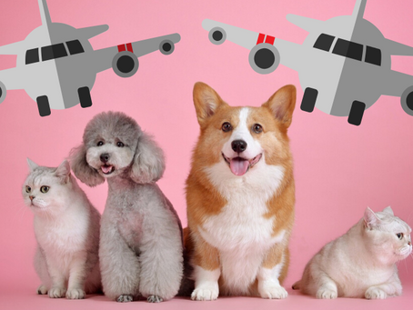 The 5 Most Dog-Friendly Airlines in the World