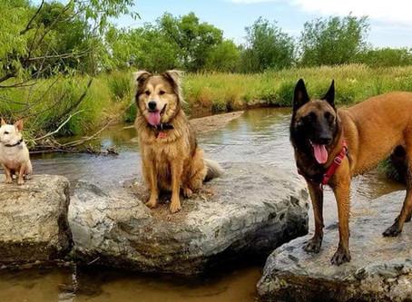 The Best Dog Park in Denver