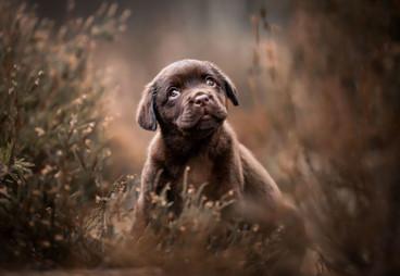 3rd-Puppies-Lotte-van-Alderen-©-800x534.