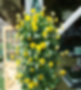 Flowers%20008_edited.jpg