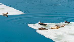 10件去南极之前一定需要知道的事