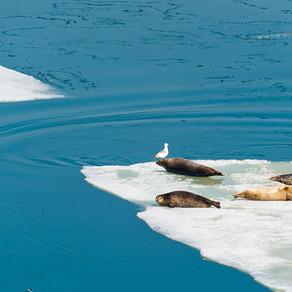 Antarctica : A Pristine Nature.