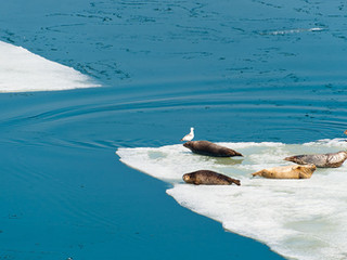 The underside of the iceberg