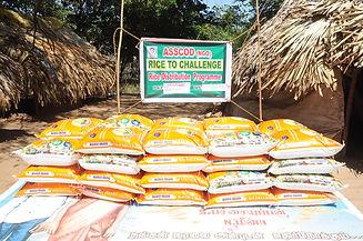 Rice Distbn3.jpg