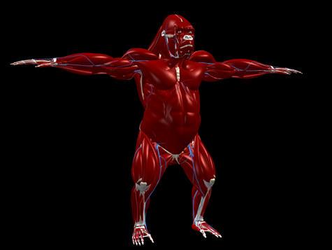 gor_muscles_v1.jpg