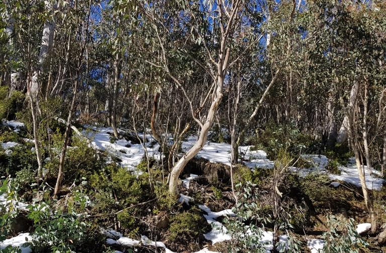 Snow_MtSkene.jpg