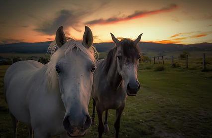 horse-2740026__480.jpg