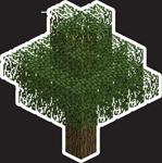 MYC Minecraft - Oak Tree 24in.png