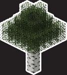 MYC Minecraft - Birch Tree 24in.png