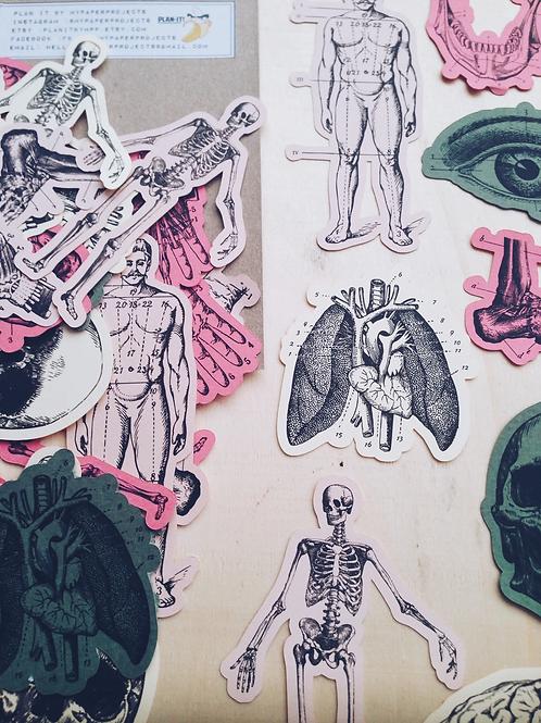 My Paper Projects | Paper Goodies | Vintage Style Anatomy Ephemera