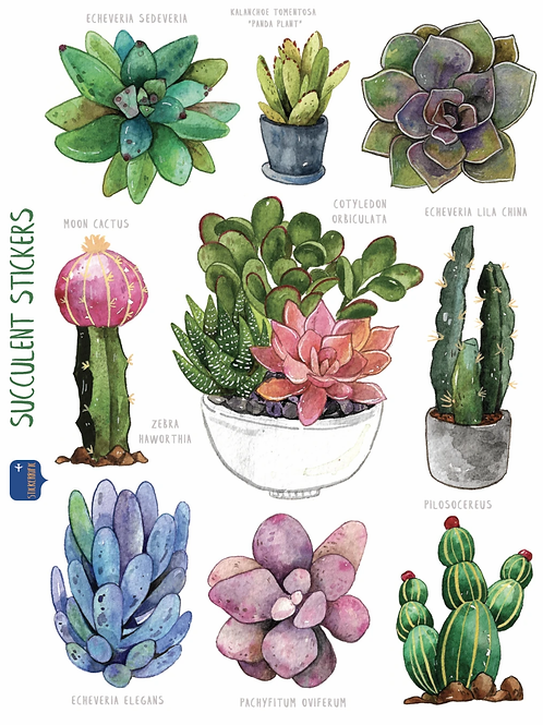 Stickerrific | Stickers | Succulent