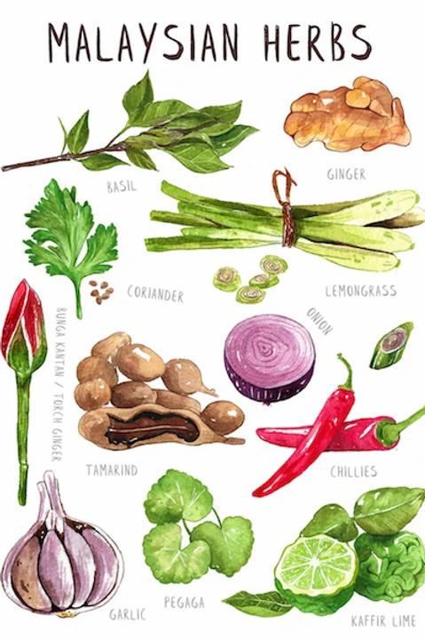 Stickerrific    Postcard   Malaysian Herbs