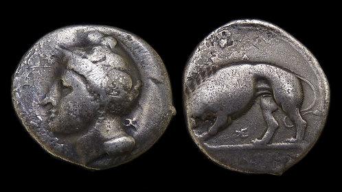 LUCANIA, Velia . 344 - 300 BC . AR Nomos . Athena / Lion devouring prey **Rare**