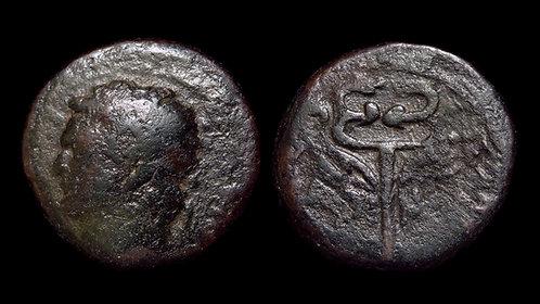 DOMITIAN . JUDAEA, Caesarea Maritima . AE14 . Winged Caduceus . *Rare*