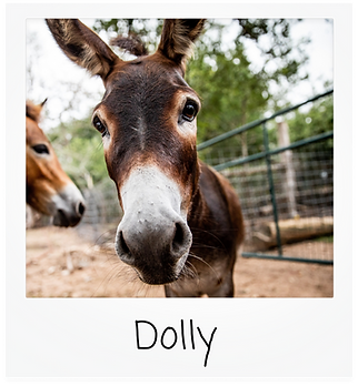 dolly.png
