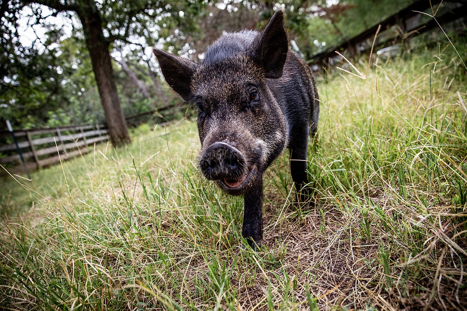 Austin Farm Sanctuary (June 28)-062.jpg