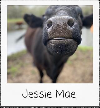 jessie mae.png