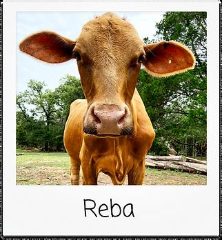 reba.png
