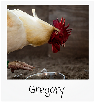 gregory.png