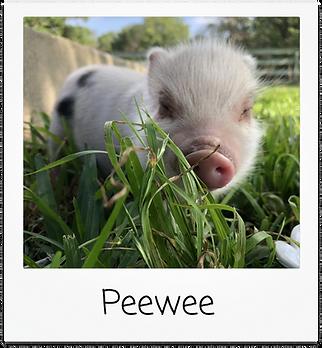 peewee.png