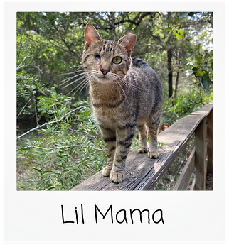 lil mama.png