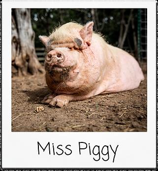 Miss Piggy.png