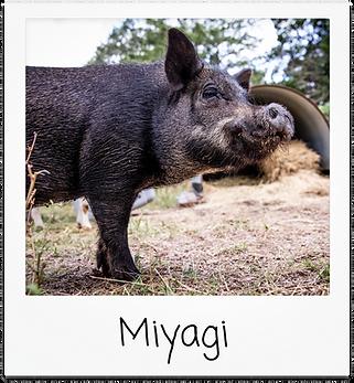 miyagi.png